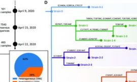 Characterization of SARS-CoV-2 viral diversity within and across hosts
