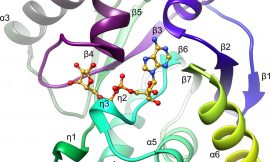 Crystal structures of SARS-CoV-2 ADP-ribose phosphatase (ADRP): from the apo form to ligand complexes