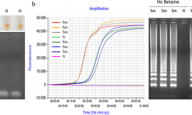 Evaluation Of SYBR Green Real Time PCR For Detecting SARS-CoV-2 From Clinical Samples