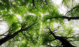 Global environmental changes leading to shorter, younger trees