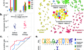 Longitudinal high-throughput TCR repertoire profiling reveals the dynamics of T cell memory formation after mild COVID-19 infection