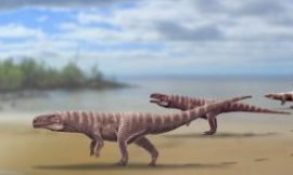 Ancient crocodile walked on two legs