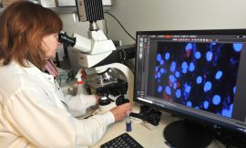 Compound in the gills of clams may fight common infections