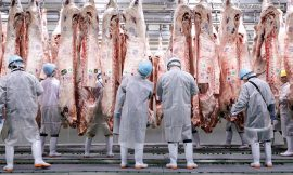 T-cell tests point to undetected MERS in Nigerian abattoir workers