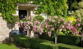 How to plant a fabulous front garden without losing your parking space