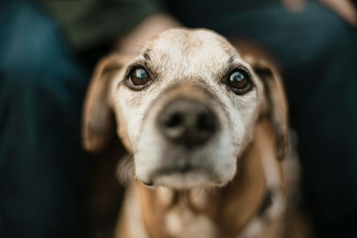 Dogs that detect seizures may be sniffing out the scent of human fear