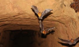 Rabies positive bat found in Martensville, first found in location since 2011: animal expert