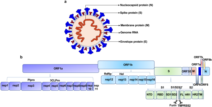 SARS-CoV-2 envelope-protein corruption of homeostatic signaling mechanisms in mammalian cells