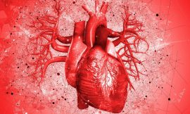 Mini-heart grown in the lab can pump fluid just like the real thing