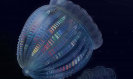 Ancient comb jelly had more complex nerves than its modern relatives