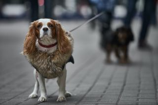 Dogs know when humans are lying to them